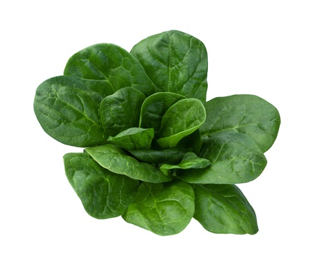 Spinach Isolated on a white background photo
