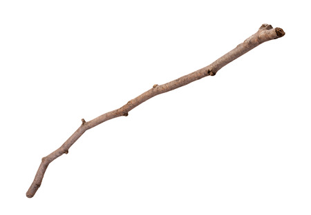Wooden Twig isolated with a clipping path, on a white background. Full focus front to back. photo