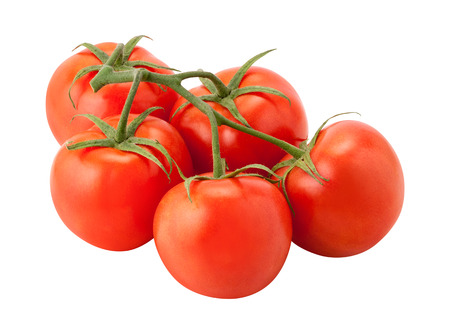 Tomatoes on the Vine, isolated on white. The image is in full focus, front to back.