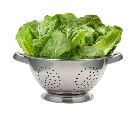 Romain Lettuce in a Stainless Steel Colander. The Lettuce is wet from a fresh washing. The image is a cut out, isolated on a white background.