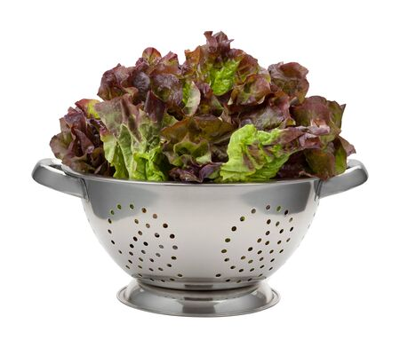 leaf vegetable: Fresh Red Leaf Lettuce in a Stainless Steel Colander. This healthy vegetable is rich in nutrition. The image is a cut out, isolated on a white background.