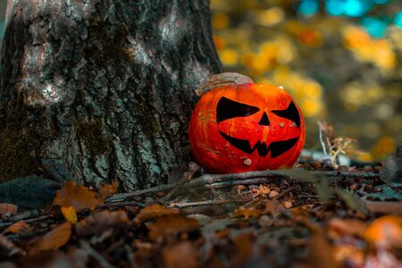 Halloween Pumpkin in the Forest. Scary pumpkin decorations with creepy toothy smile at wood background.