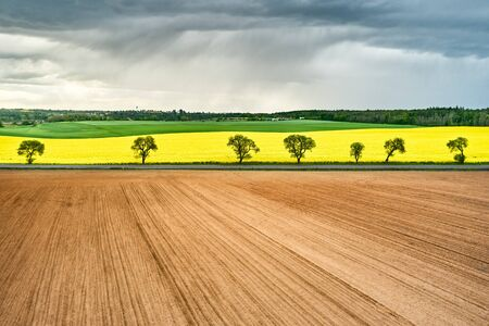 Panoramic view of empty and yellow rapeseed fields, separated by trees in storm. Brown, yellow and green fields in rain. Rainy clouds under the field. Postcard concept