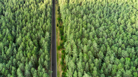 Top view of a highway road in the middle of the forest. Road separated two part of the pine wood.