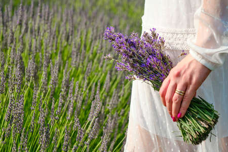 Female in a white dress hand holding a bouquet of lavender on the background of lavender field with copy space. Foto de archivo