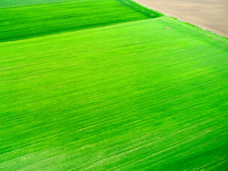 Aerial view on a field with bright green grass. Natural texture. Zdjęcie Seryjne