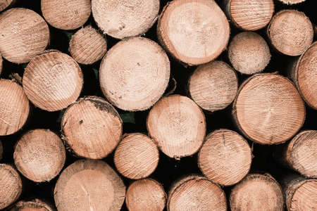 Pile of wood logs background. Round wooden texture. Freshly cut tree wooden logs for winter, production or processing.