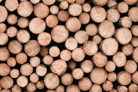 Pile of wood logs background. Round wooden texture. Freshly cut tree wooden logs for winter