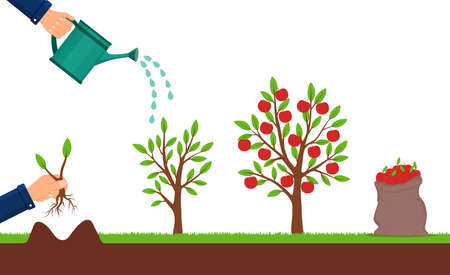 Growth of apple tree and harvesting. Hand plants a sapling of fruit tree. Cultivation process of fruit. Seedling plant with leafs. Bag of apples. Growing sapling. Isolated vector illustration Иллюстрация
