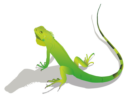 Iguana.Illustration.Vector. Illustration