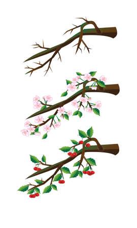 Cherry branches. Illustration