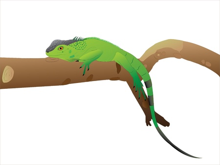 The Iguana is having a rest Stock Vector - 9539831