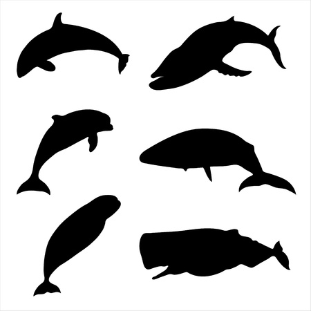 Whales and dolphins. Stock Vector - 10031132