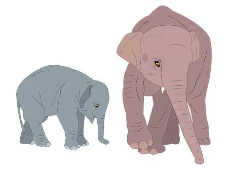 family of elephants. Illustration