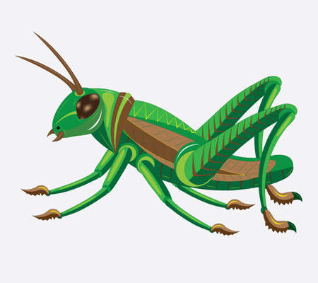 Green-brown grasshopper. Illustration