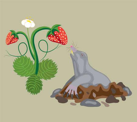Mole and wild strawberry.