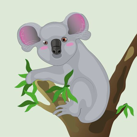 Koala on a tree.