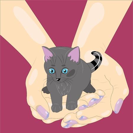 Kitten in palms.  illustration. vector.