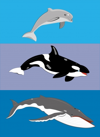 Different types of whales. Illustration