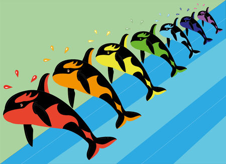 Multicolored killer whales   Vector