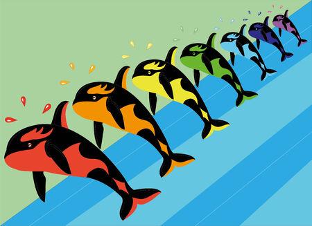 Multicolored killer whales   Vector