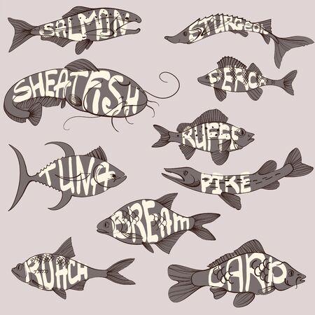 Fishing illustration, handdrawn lettering, carp, roach, perch, salmon, sturgeon, tuna, ruffe, sheatfish, pike, bream. Vector