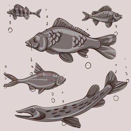 Fishing illustration. Perch, roach, carp, pike. Vector