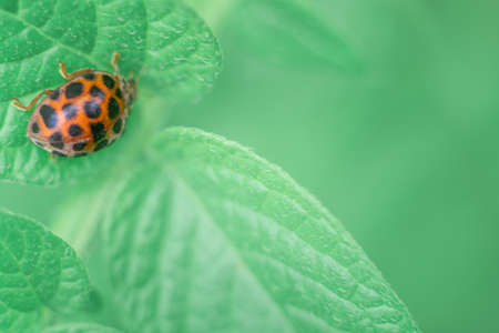 Defocused spring nature background with Ladybug on green leaf. Close up image. Soft focus dreamy image. Summer, spring season concept. Card, notebook cover.