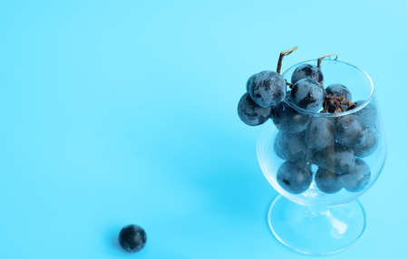 Bunch of black grapes in the glass on blue blurred background. Selective focus. Wine degustation, harvesting concepts. Wide banner for copy space. Banque d'images