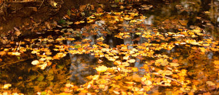 Lots of leaves on the water of river in the forest. Bright autumn concept. Greeting card, notebook cover, banner. Autumn background. Selective focus. Banque d'images