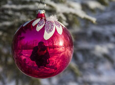 on a Christmas tree toy on a branch of fir trees in winter reflected by a photographer