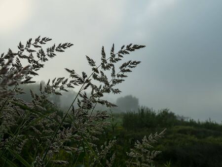 grass on a foggy morning