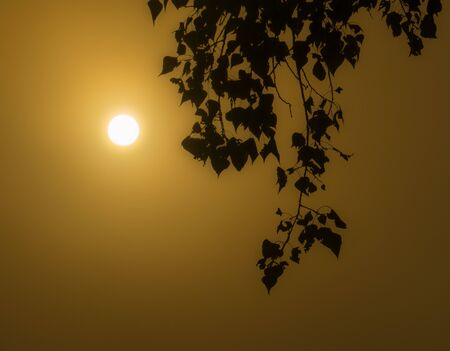 Birch branches on a foggy morning with the rising sun in the fog 写真素材