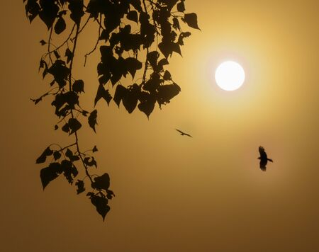 foggy morning with the rising sun and birds flying high. 写真素材