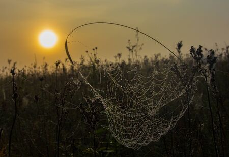 Spider web with dew drops on a foggy morning Stok Fotoğraf