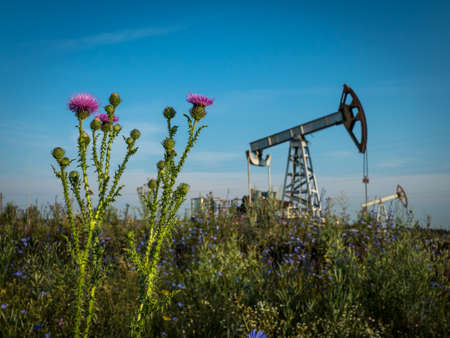 Stem of blooming thistle in a field with oil pump under blue summer sky Imagens