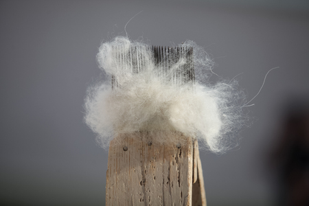 Materials for spinning wool, close up front view