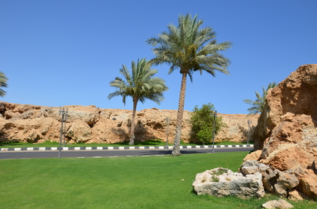 My journey in the spring of 2012 to Sharm El Sheikh Stock Photo