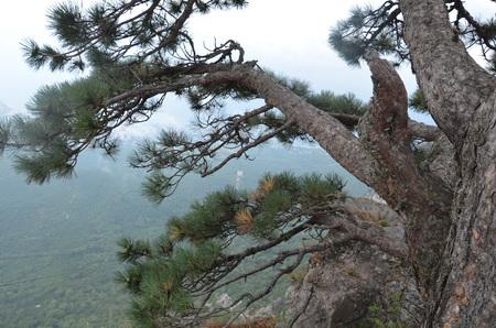 petri: The Mount Ai-Petri over the Black Sea in Crimea, Russia. Ai-Petri is one of the highest mountains in Crimea and tourist attraction.