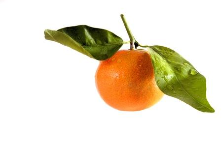 Tangerine [isolated]
