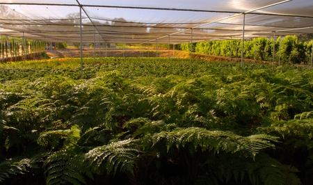 Indoor growing fields Stock Photo