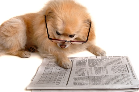 sudoku: Smart Dog Reading The Newspaper Stock Photo