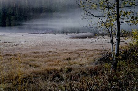 Beautiful misty morning fog in yosemite valley photo