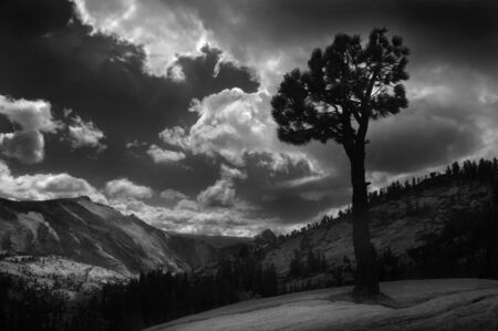 Beautiful Black and White image of lone tree yosemite, Half dome in distance photo