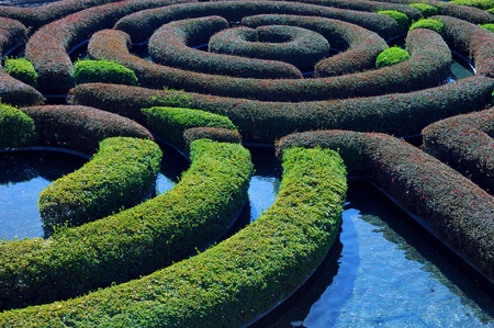 logic: Interesting Image of a complicated Hedge Garden Stock Photo