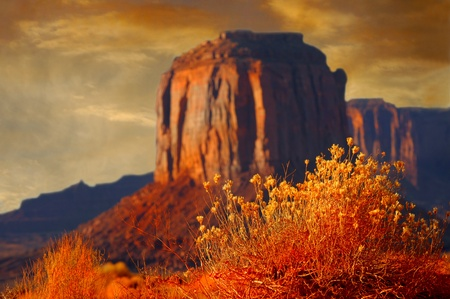 Beautiful Selective focus Image of the Flowers Of monument Valley photo