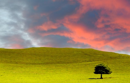 Beautiful Panorama of Hawaii Farmland blue sky and clouds Stock Photo - 12921015