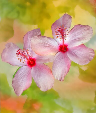 Nice Image of an Original Watercolor Painting with Hibiscus photo