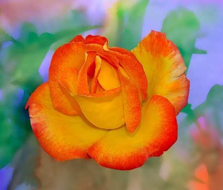 Nice Image of an Original Watercolor Painting with Multi Colored Rose