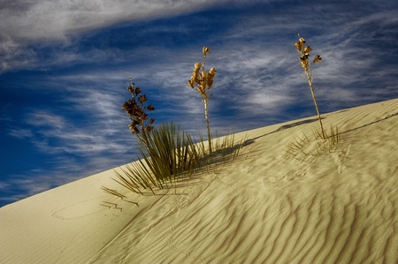 Beautiful image of the dunes in White sands new mexico photo